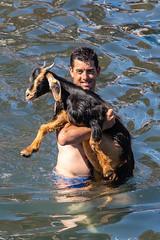 2018-06-24 Ziegenbad in Puerto de la Cruz (20) - Das Ziegenbad (Baño de Cabras) ist eine alte Tradition der Ureinwohner der Kanaren (Guanchen). Es wird jedes Jahr am 24. Juni in Puerto de la Cruz auf Teneriffa veranstaltet. Ziegenherden aus dem Umland wer (mike.bulter) Tags: animal bañodecabras canarias canaries canaryislands esp espana goat hafen kanaren kanarischeinseln puertodelacruz spain spanien tenerife teneriffa tier tradition ziege ziegenbad ziegenbaden ziegenhirte baño de las cabras