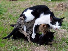 IMG_20180222_163358 (reinh_3008) Tags: tunesien tunisia tunesia animal cat threesome nature afternoon sex three