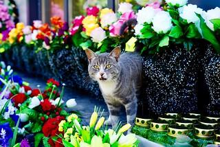 Cemetery cat.