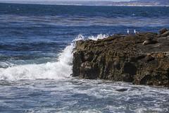 July 2, 2018 (shnphotographer) Tags: cali california ca sandiego lajolla lajollacove wave water ocean pacificocean beach