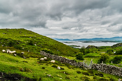 Sheep on the Hill (*Capture the Moment*) Tags: 2018 ai clouds farbdominanz hikearoundcroaghpatrick himmel ireland irland landscape landschaft lumlook sky sonya6300 sonye18200mmoss sonyilce6300 wetter wolken cloudy green grün wolkig