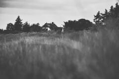 Sommer an der Nordsee (Til..) Tags: sommer föhr nieblum schleswigholstein sw schwarzweis reetdach insel blackandwhite