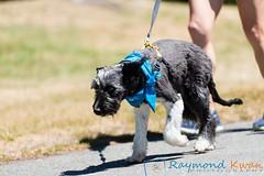 2018Furry5K_600_4730 (Raymond Kwan Photography) Tags: furry5k animal shelter dog puppy charity sewardpark 2018 5k run furry