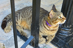 Key West (Florida) Trip 2017 7747Ru 4x6 (edgarandron - Busy!) Tags: cat cats kitty kitties cute feline florida keys floridakeys keywest hemingwayhome