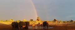 1. ElephantSands-Waterhole&Ellies