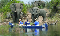 1. Canoe Safari's
