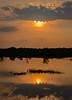 Reflection. (Fazia_) Tags: sunset sky water tree grass serene cloud reflection goldenhour