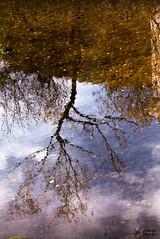 Reflejo | Reflection (nrbargo) Tags: reflejo reflection nubes cielo sky clouds airelibre canon canon750d canonistas