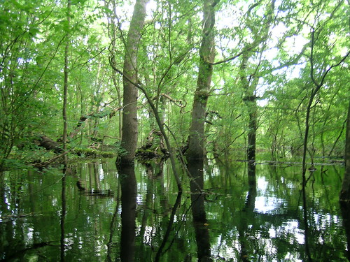 Other wet woodland in turlough basin. Photo by Micheline Sheehy Skefffington.