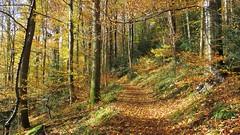 Couleurs d'automne dans la forêt du Battert (ViveLaMontagne67) Tags: automne schwartzwald badenbaden battert feuilles allemagne germany deutschland forêtnoire nordschwarzwald forest trees leaves path 250v10f