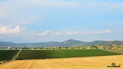 A-LUR_6402 (OrNeSsInA) Tags: panicale paciano trasimeno umbria italia italy natura panorami landescape
