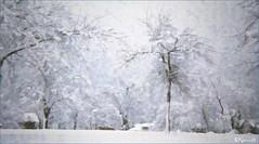 Queen Square, winter (Kennuth) Tags: park queensquare saintjohn newbrunswick snow trees