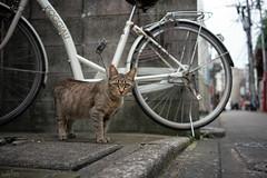 猫 (fumi*23) Tags: ilce7rm3 sony 35mm sel35f28z sonnartfe35mmf28za sonnar zeiss a7r3 miyazaki feline katze gato chat cat neko street alley bicycle bokeh ねこ 猫 路地 街の猫 animal 宮崎 ソニー
