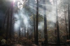 Daylight Dream (jojo (imagesofdream)) Tags: yosemite california mist beams forest landscape