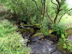 Ruisseau Irlande (Yset1) Tags: ruisseau arbre irlande
