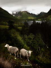 Curiosity (dochema2000) Tags: ifttt 500px snowcapped valley lake forest snow rural scene mountain range hill nonurban peak hartsop sheep