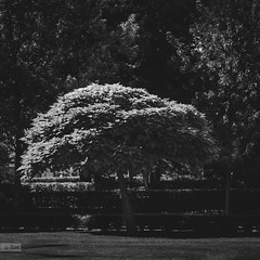 e-lias-308 (e-lias hun) Tags: urban tree blackandwhite park elias 5018d nikon d7000 dark