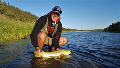 Brown Trout (kdlinab) Tags: brown trout alberta 25 inch