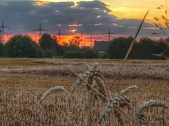 Sonnenuntergang / Sunset (>>DenKo<<) Tags: sonnenuntergang sunset sonne sun natur nature clouds wolken sky himmel landschaft landscape kornfeld nrw sunlight naturephotography