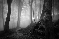 Path to the light (ilias varelas) Tags: fog forest field blackandwhite bw nature mood mono monochrome mist atmosphere greece trees light landscape land