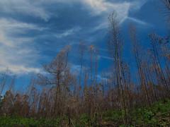 Marayoor, Idukki, Kerala, India.......... (yadhukrishnan.) Tags: nature india tree kerala idukki sky blue green greatphotographers greatshot photography powershot gogreen saveearth savenature