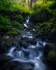 Trillium of Eden (Björn Burton Photography) Tags: trilliumfalls waterfall northerncalifornia redwoods ferns green coastalcalifornia california water longexposure landscapephotography bjornburtonphotography
