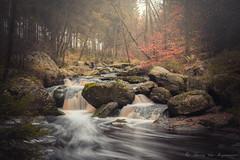La Hoegne (vanregemoorter) Tags: nature rivière bois wallonie cascade forêt eau ruisseau pierre arbre paysage brume