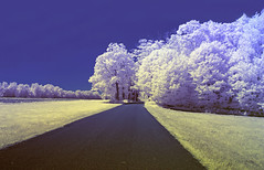 Country RD IR (Jammie Thouin) Tags: ashfield black background canon dark disturbing eos sky light massachusetts ma open photography t3 wide white infra red infrared hoya 720nm r72 rokinon 1424mm f14 24mm ed as if umc road grass landscape people photo