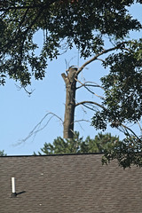 Tree Truck Lifter Above Neighbors House (hbickel) Tags: treetrunk lifted trees houseroof photoaday pad canont6i canon