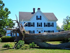 DSCN5698, Large tree downed at a neighboring house, July 2018 (a59rambler) Tags: capecod massachusetts