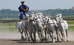 Bakod Horse Farm at Kalocza (243) (F) (Richard Collier - Wildlife and Travel Photography) Tags: hungary danuberivertrip horses horseriding kalocza bakodhorsefarm hungarianequineshow