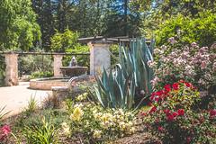 Descanso Gardens - Fountain | Los Angeles, CA (jc.deluna@rocketmail.com) Tags: descansogardens roses flowers garden outdoors fountain nature
