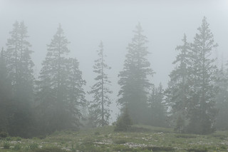 Silhouettes dans le brouillard