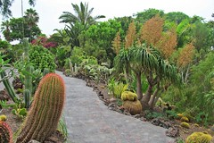 among cactuses and succulents :) (green_lover (your COMMENTS are welcome :))) Tags: cactuses succulents junglepark tenerife canaryislands spain path plants green palms