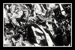 Stumpery (Develew) Tags: stumpery oakstumps treestumps biddulphgrange cheshire england blackwhite monochrome whiteblack gardens gardening abstract abstractart