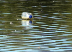 Adrift (Smiffy'37) Tags: water plastic bottle art lake rubbish minimalist minimal