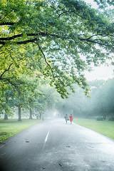 Walking into mist (Varvara_R) Tags: mist misty weather summer evening park walk trees silhouettes calmness peaceful tranquil tranquility silence sonycybershotdscrx100iii sony sonyrx100m3 sonyrx100iii sonyrx100 sonydscrx100m3 publicgarden botanicalgarden perspective
