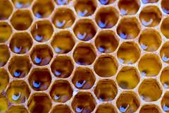 65100822-LR-3000 (the.digitaleye) Tags: honey comb honeycomb bee honig biene waabe macro canon nfd 50mm f35 pattern muster symmetrie symmetry symmetric sechseck hexagon wax wabe struktur structure