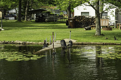 I need a little work (TAC.Photography) Tags: southbranchausableriver river ausable dock abandoned lilypads tacphotography tomclarknet