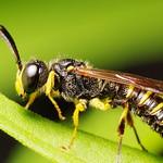 Tiny Wasp in the Backyard (#2) thumbnail