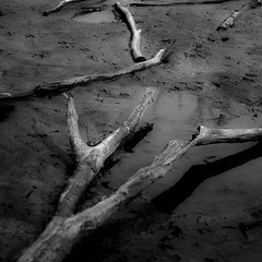 Flooded Banks 018 (noahbw) Tags: captaindanielwrightwoods d5000 desplainesriver nikon abstract blackwhite blackandwhite branches bw decay decaying forest landscape log monochrome mud natural neglected noahbw quiet river spring square still stillness water weathered wood woods