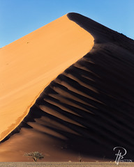 Sand Sea (TJ and Liz) Tags: sand sunrise dune dunes desert namib namibnaukluft national park sossusvlei sesriem namibia africa light dark patton photography 40