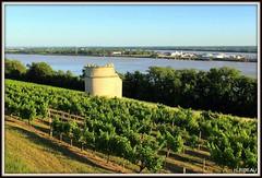 Panorama sur l'estuaire de la Gironde et le Bec d'AMBES. (Les photos de LN) Tags: panorama estuaire gironde garonne dordogne fleuves rivières aquitaine sudouest paysage nature vignes versant moulin becdambès