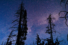 Pines (LevixBroski) Tags: canon rebel sl1 night sky star stars milky way milkyway long exposure longexposure utah ut 801 slc saltlake salt lake rokinon samyang 24mm bower tree trees pine pines adventure mountains mountain hiking water red white black blue green