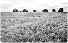 Stainton . (wayman2011) Tags: colinhart wayman2011 bwlandscapes mono rural huawei mobile phone fields pennines dales teesdale stainton countydurham uk