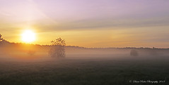 Mystic morning (anaidphotography) Tags: morning morgenlicht sonne sunlight sunrise field naturfotografie diana ruder fog nebel beautiful brandenburg mystic landschaft landscape deutschland