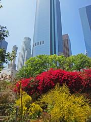 Downtown Los Angeles (BudCat14/Ross) Tags: losangeles la california urban buildings highrise