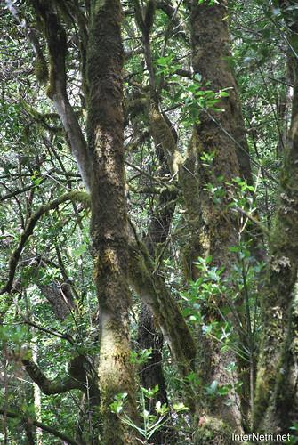 Національний парк Гарахонай, Гомера, Канарські острови  InterNetri  0709