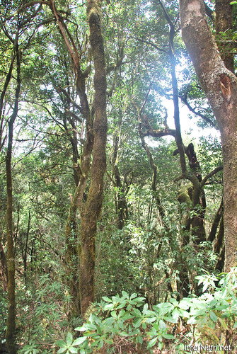 Національний парк Гарахонай, Гомера, Канарські острови  InterNetri  0695