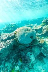 Underwater Heron Island-7 (Quick Shot Photos) Tags: australia canon canoncollective greatbarrierreef heronisland queensland underwater bogie au